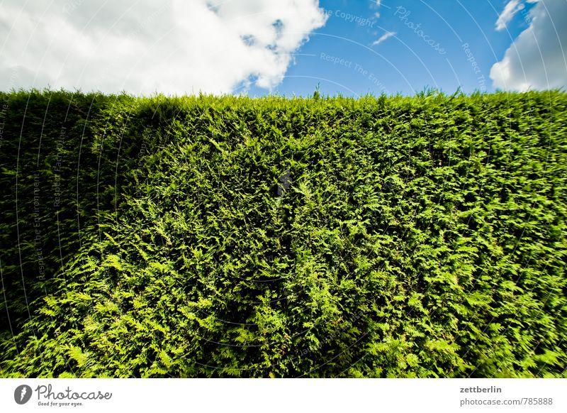 Hecke Himmel grün Pflanze Sommer Wolken Wand Garten Textfreiraum Grenze Schrebergarten Nachbar himmelblau Versteck bewachsen Kleingartenkolonie