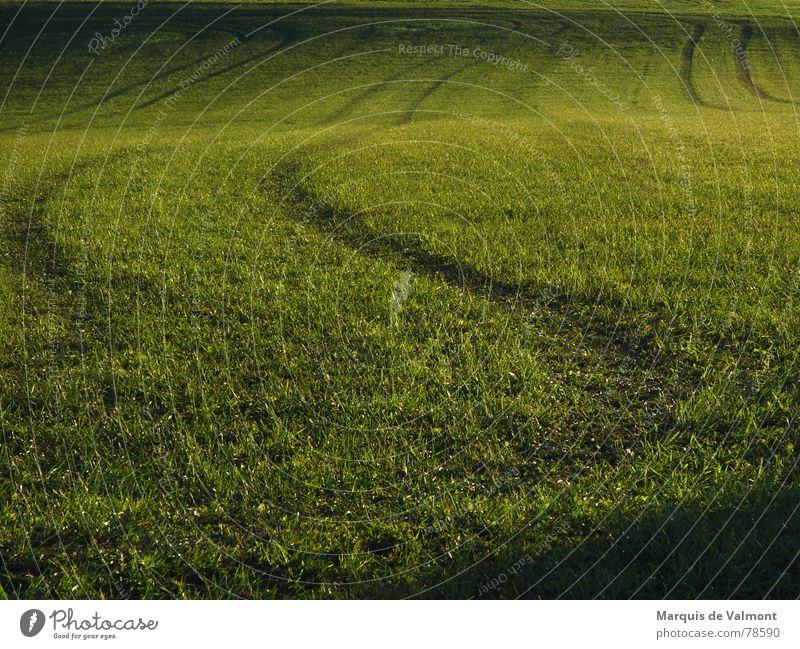 Grüne Spuren im Gras Wiese grün Feld Wellen Sonnenlicht sonnentiefstand wenn der bauer besoffen war Schatten