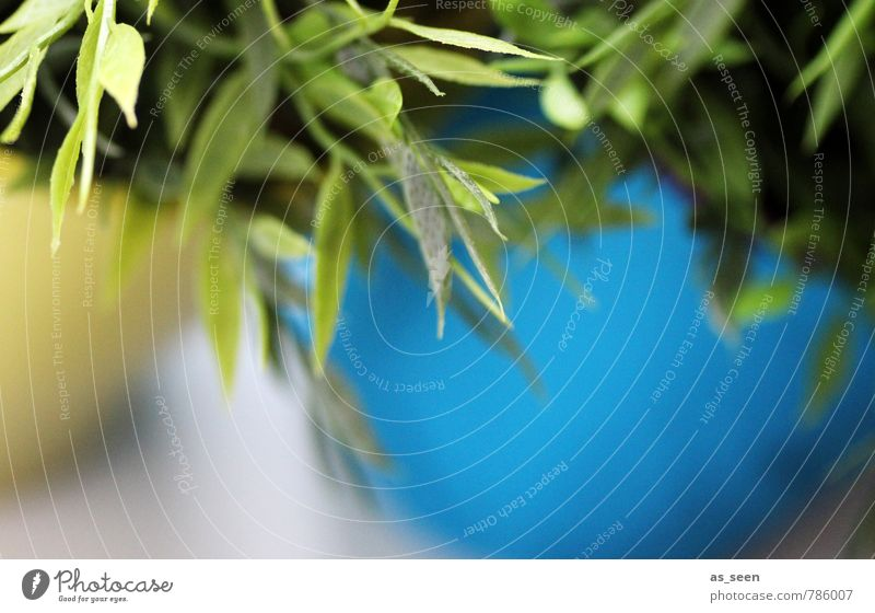 Frisches Grün Natur blau grün Farbe Pflanze weiß gelb Leben Innenarchitektur natürlich Garten Wohnung Häusliches Leben Büro Design Wachstum