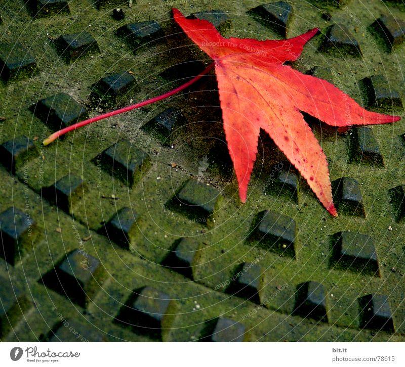 Blatt Natur grün Baum Pflanze Sommer Blume Einsamkeit schwarz gelb Straße Herbst dunkel Gras Regen Platz