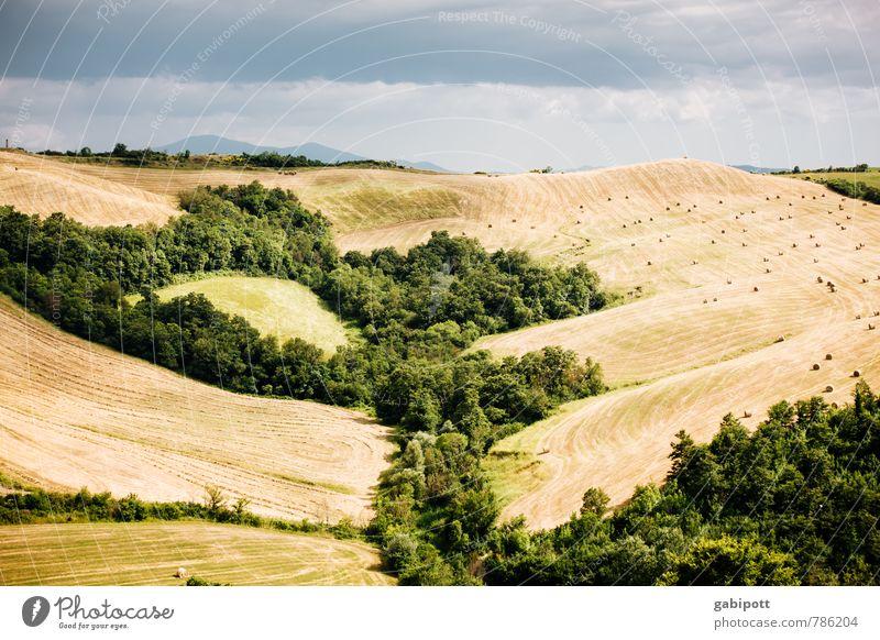 Wald- und Wiesenidylle Ferien & Urlaub & Reisen Ausflug Ferne Sommerurlaub Berge u. Gebirge wandern Landschaft Erde Himmel Wetter Feld Hügel Toskana Erholung