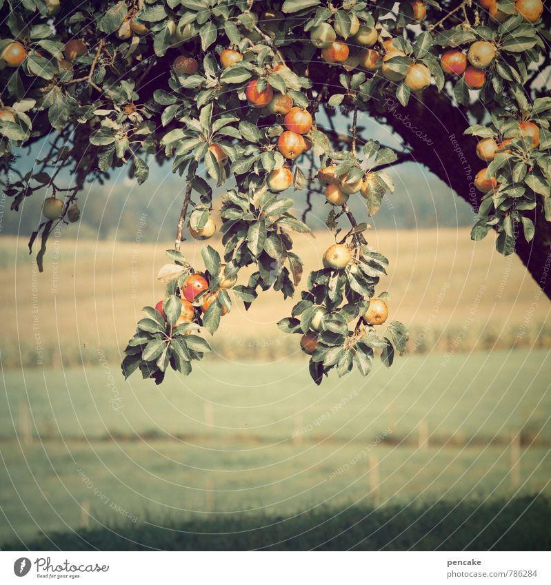 bodenständig | streuobst Frucht Natur Landschaft Urelemente Erde Sommer Schönes Wetter Baum Gras Nutzpflanze Wiese Feld authentisch Fröhlichkeit frisch
