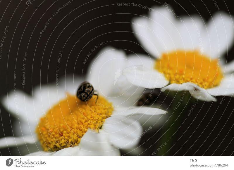 Insekt Natur schön Pflanze Sommer ruhig Tier Umwelt Frühling Blüte natürlich elegant Wildtier authentisch ästhetisch einfach Blühend