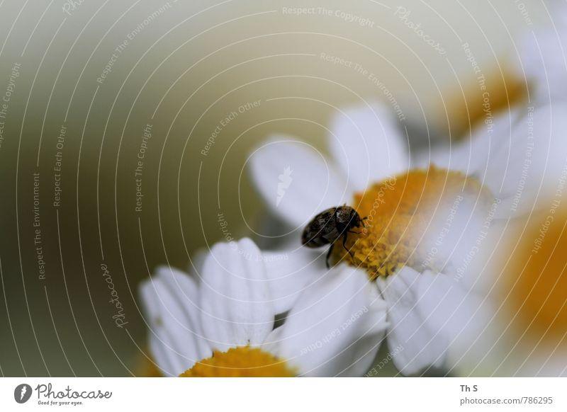 Insekt Umwelt Natur Pflanze Frühling Sommer Blüte Wildtier 1 Tier Blühend Duft ästhetisch authentisch elegant Frühlingsgefühle Gelassenheit geduldig ruhig