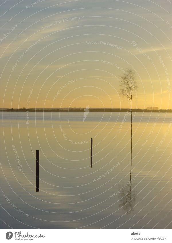 Dreisamkeit Natur Wasser Himmel Sonne blau Blatt Wolken gelb Herbst See Horizont Aussicht Abenddämmerung Birke Herbstbeginn Dümmer See