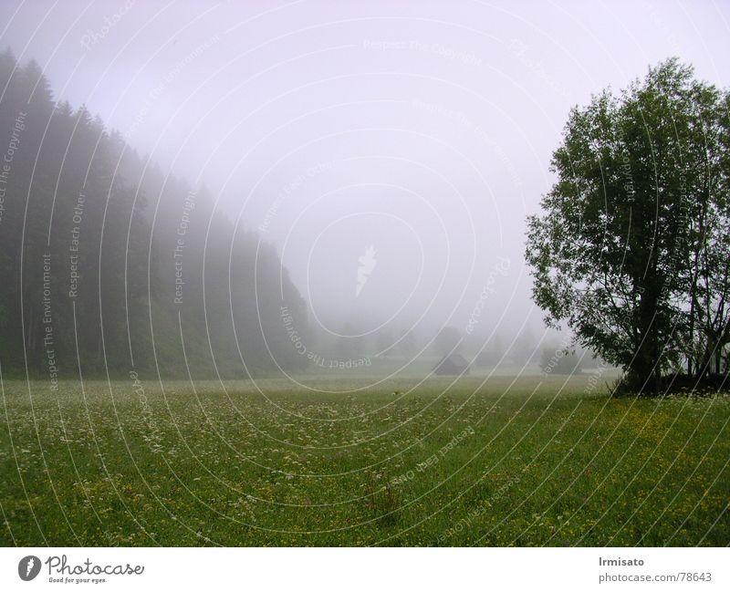 Sommermorgen Natur Baum Wiese Landschaft Nebel
