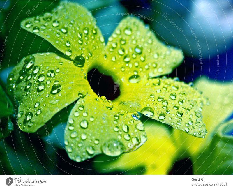 schlicht und einfach Hippie einweichen Wohlgefühl hydrophob gelb grün mehrfarbig Blume Blüte Pflanze Zierpflanze nass frisch Eis kalt Frühling Herbst Wellness