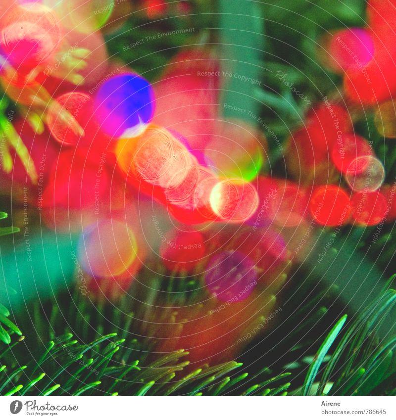 Mehrzweckdeko Feste & Feiern Karneval Weihnachten & Advent Jahrmarkt Pflanze Baum Tannenzweig Nadelbaum Tannennadel glänzend leuchten Fröhlichkeit mehrfarbig