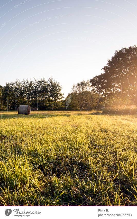 Letzte Sonnenstrahlen III Sommer Natur Himmel Schönes Wetter Baum Gras Feld natürlich Zufriedenheit Lebensfreude Heuballen Stoppelfeld ruhig Farbfoto