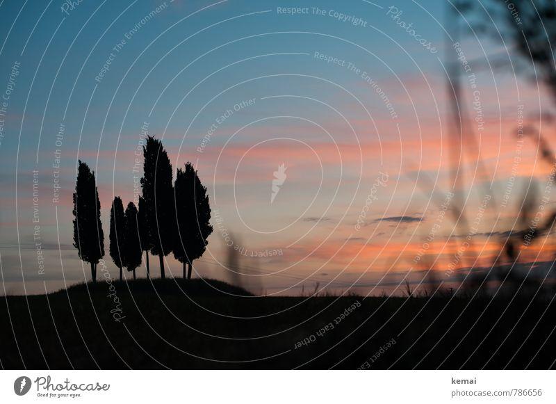 Klassiker Umwelt Natur Landschaft Pflanze Himmel Wolken Sonnenaufgang Sonnenuntergang Sonnenlicht Sommer Schönes Wetter Baum Zypresse Wiese Hügel Toskana