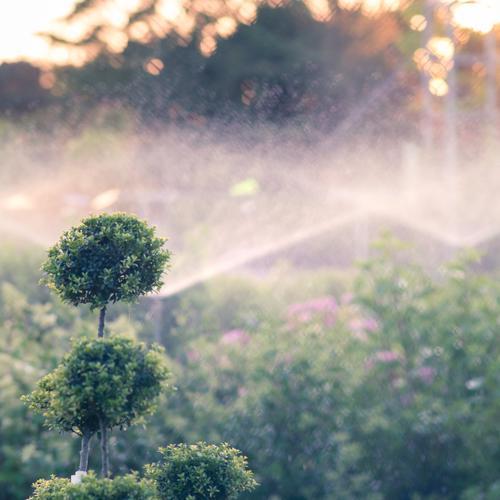 TrockenPeriode Natur grün Pflanze Sommer Wärme Garten Sträucher Klima Schönes Wetter Gartenarbeit Dürre gießen sprühen Gärtnerei Bewässerung Buchsbaum