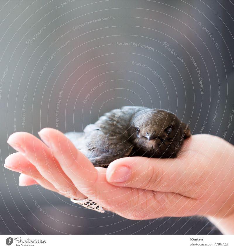 gerettet Tier Traurigkeit Vogel liegen sitzen Wildtier Warmherzigkeit weich berühren Schutz Sicherheit Vertrauen Tiergesicht Wachsamkeit Fürsorge Geborgenheit