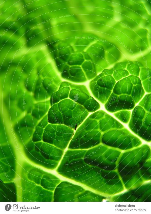 greens authentisch ökologisch rein Vitamin Composing Pflanze Lebewesen Botanik Lebensmittel roh unbearbeitet Pflanzenteile Ernährung Lebenskraft frisch