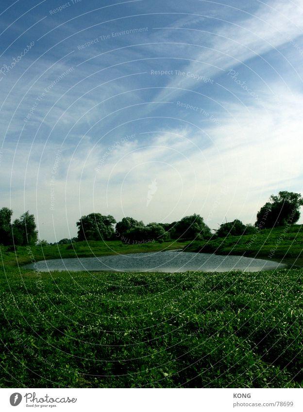 elbaue Flußauen Idylle Elbaue Altmark See beschaulich Teich grün Wiese Gras Sommer Grünfläche Pflanze Wildnis Umwelt Himmel elbauen niederung Natur Wasser Elbe
