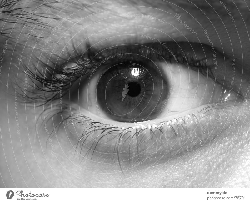 Eye (Teil 1024) Wimpern braun Mensch Auge Schwarzweißfoto Regenbogenhaut kaz