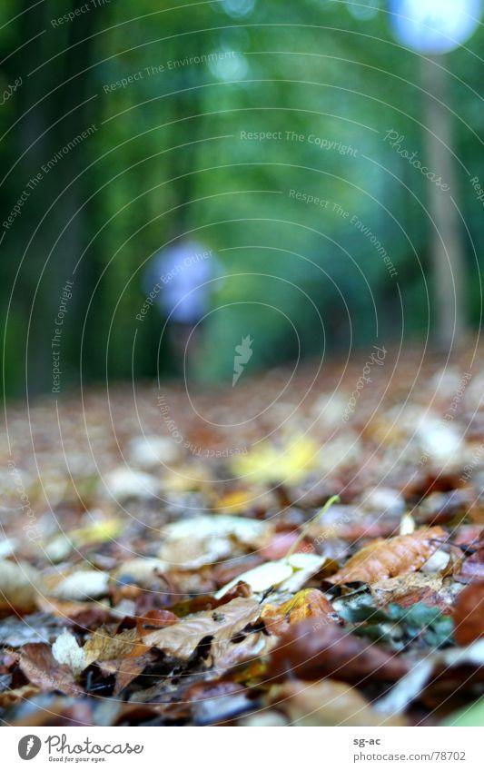 Herbstjogger Mensch grün Blatt gelb Straße Herbst Spielen Wege & Pfade braun Verkehrswege anstrengen Joggen Laufsport herbstlich Jogger