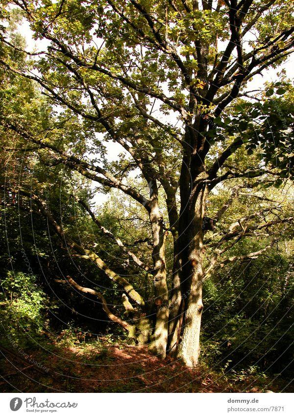 sunlow Natur Baum Sonne