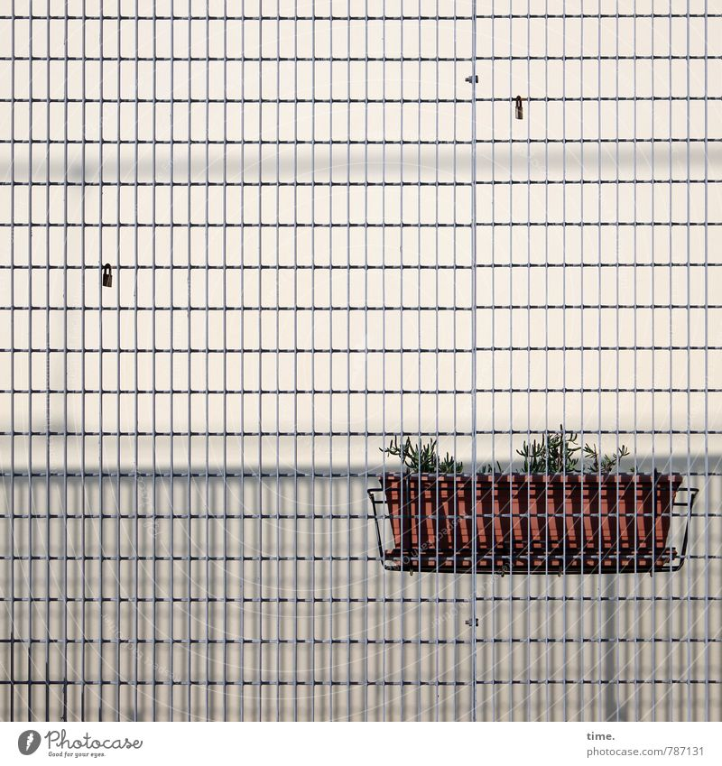 verraten & verkauft Pflanze Blumenkasten Mauer Wand Fassade Gitter Gitterrost Gitternetz Schmerz Enttäuschung Einsamkeit bizarr Design Endzeitstimmung Hoffnung