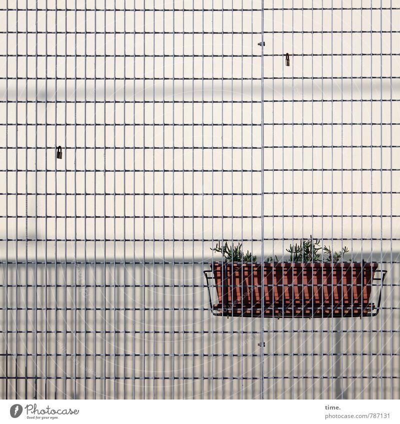 verraten & verkauft Stadt Pflanze Einsamkeit Ferne Wand Traurigkeit Mauer Zeit Fassade Ordnung Design Vergänglichkeit Hoffnung Zusammenhalt Konzentration
