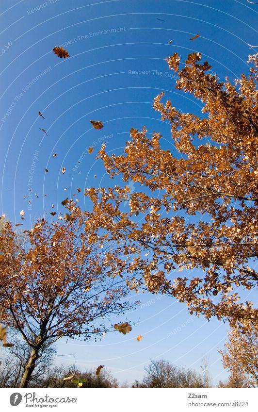 herbsttraum Natur Himmel Baum blau Blatt Herbst träumen Landschaft fliegen Jahreszeiten
