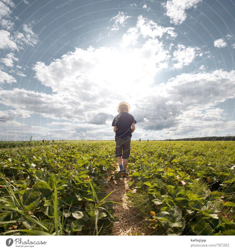 fussbalpause Mensch Kind Natur Pflanze Sommer Landschaft Wolken Tier Umwelt Junge Essen Horizont Feld Kindheit Landwirtschaft 8-13 Jahre