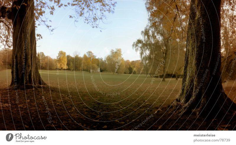 park 1 Baumrinde Park Wald Herbst Blatt Baumstamm ruhig Wiese Grünfläche Pflanze grün Gras Außenaufnahme Natur Garten Rasen meisterleise