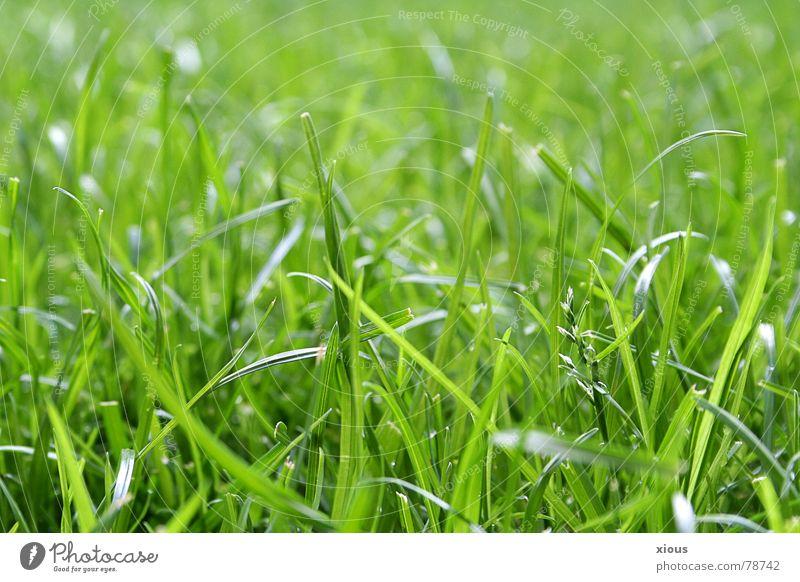 ungemäht Natur grün Sommer ruhig Leben Erholung Wiese Gras Garten frisch liegen Sportrasen Gelassenheit Tiefenschärfe Sportplatz Naturliebe