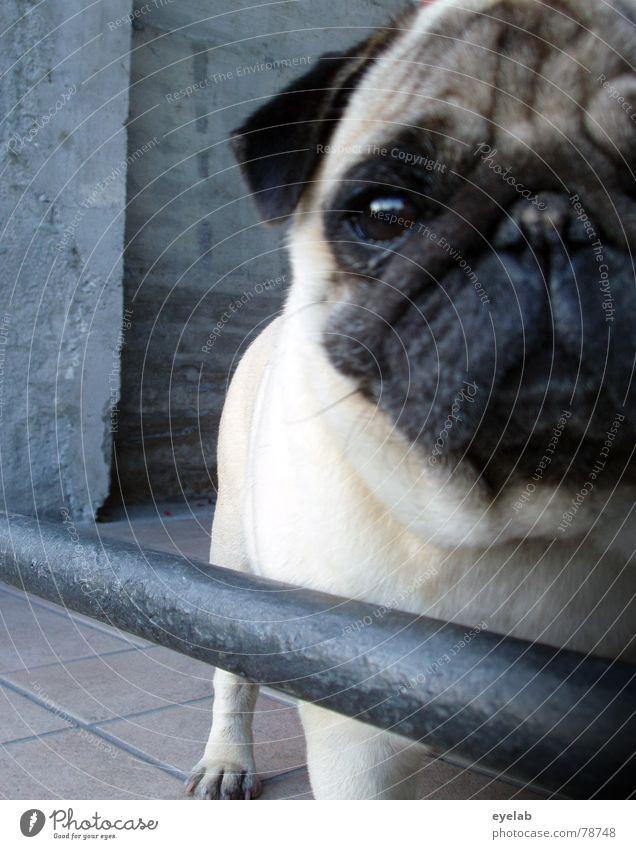 Lassie Hund Tier Freude schwarz Auge Beine grau Haare & Frisuren Stein braun Angst gefährlich Beton Nase Schutz Hoffnung