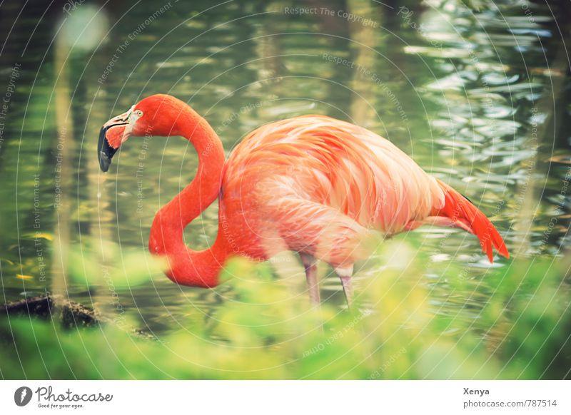 Im hohen Grase grün Tier orange exotisch Zoo Hals geschwungen Flamingo