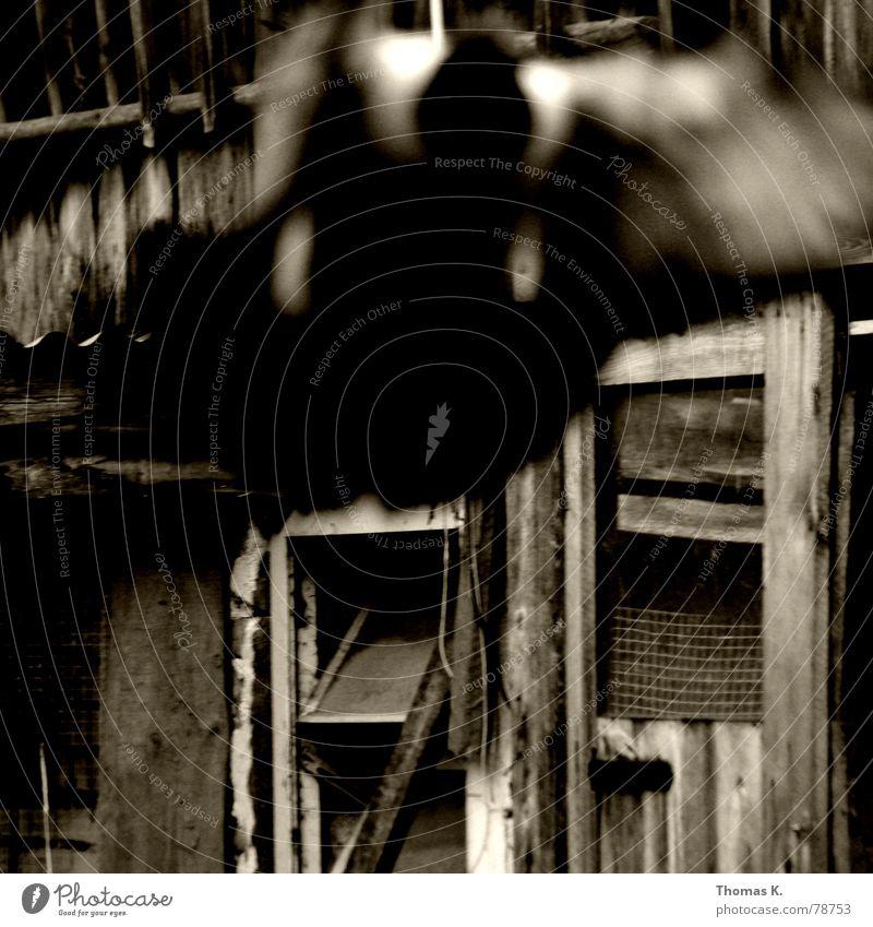 Tiefflug (oder fokussieren will gelernt sein) schwarz dunkel Fenster Holz Vogel Luftverkehr Feder Flügel trashig Taube Scheune Stall Grunge Holzmehl