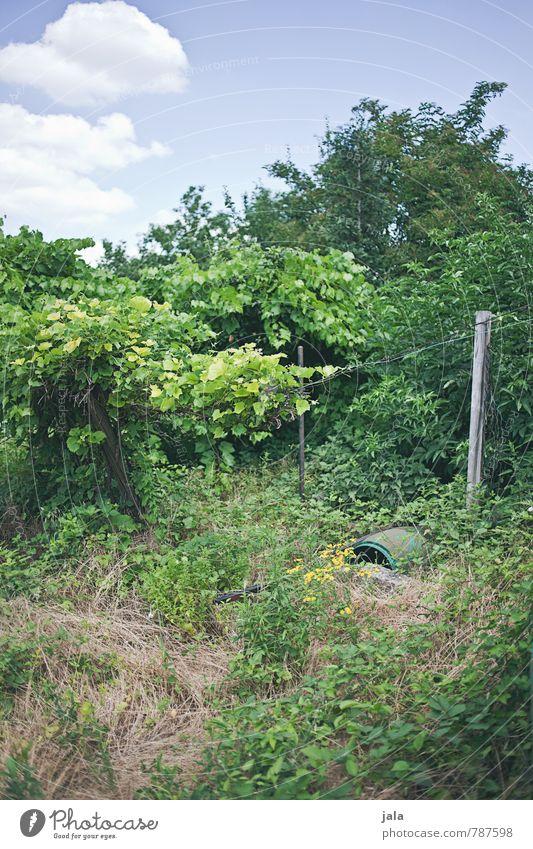 wildwuchs Umwelt Natur Pflanze Himmel Wolken Sommer Schönes Wetter Baum Blume Gras Sträucher Grünpflanze Nutzpflanze Garten natürlich verwildert Farbfoto