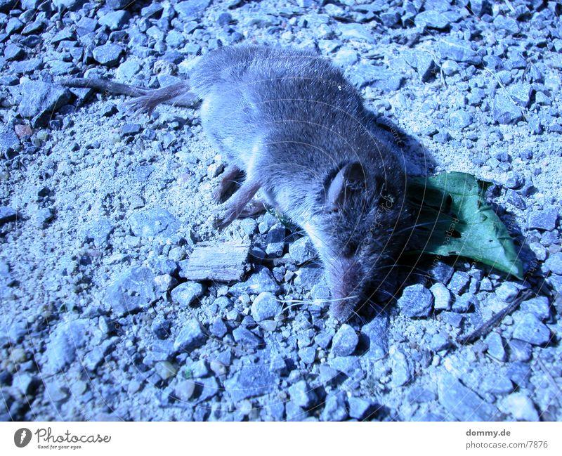 rat-race Natur Tod grau Traurigkeit Trauer trist Maus