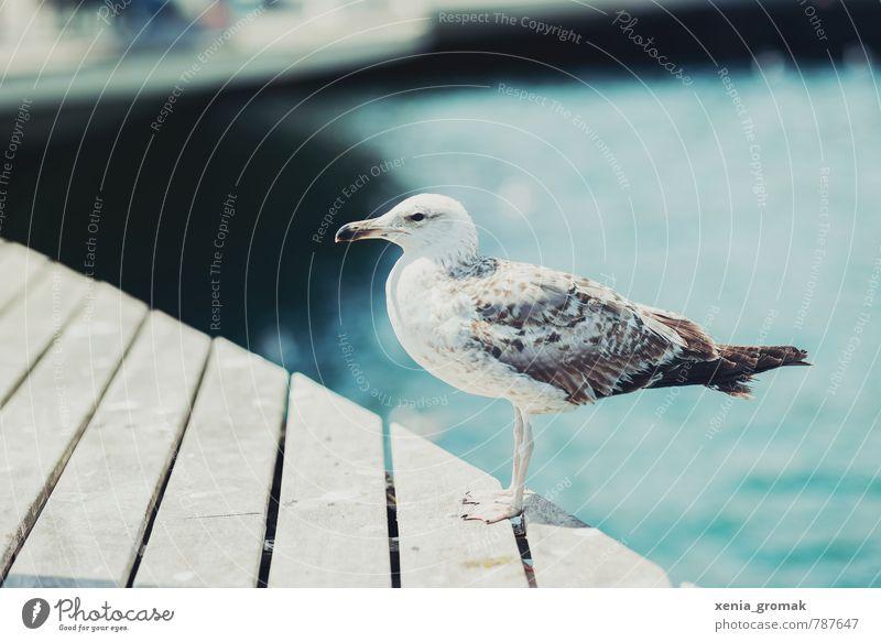 Möwe Natur Ferien & Urlaub & Reisen Wasser Sommer Sonne Meer Tier Strand Ferne Umwelt Reisefotografie Freiheit Vogel Freizeit & Hobby Lifestyle Idylle