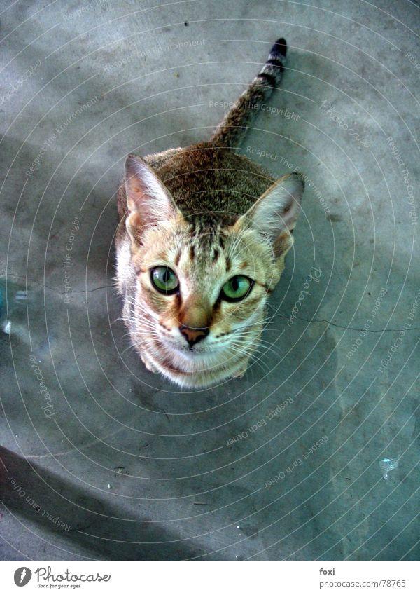 Her mit dem Futter, Dosenöffner! grün Auge Katze Sehnsucht Säugetier bewegungslos Tier Perspektive betteln