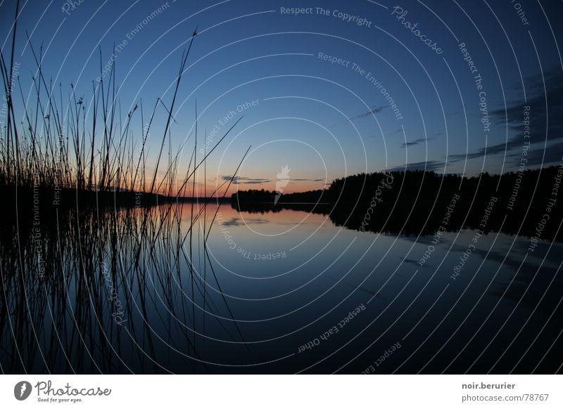 Sonnenuntergang in den Masuren ruhig Ferne Sommer Natur Himmel Wolken Horizont Sonnenaufgang Seeufer blau schwarz Stimmung Abendsonne Schilfrohr Röhricht