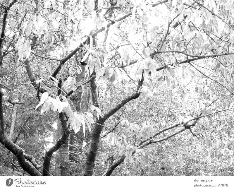 der Herbst kommt... Baum Blatt Trauer Schwarzweißfoto Traurigkeit alt kaz