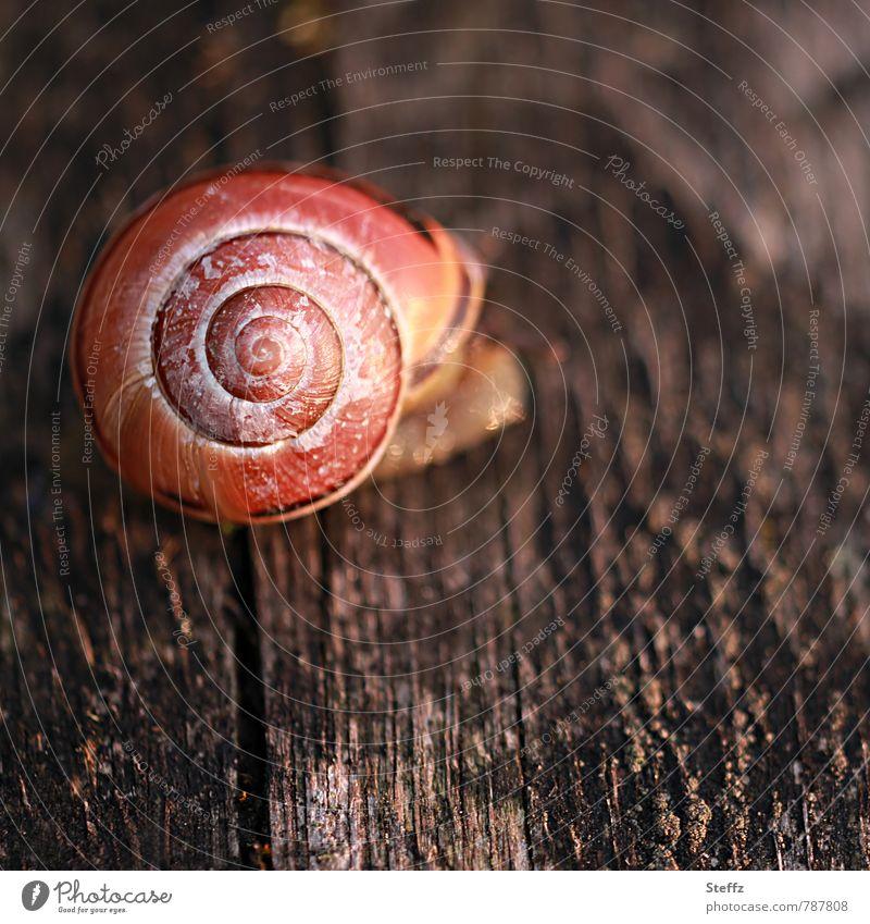 Deko-Schnecke Natur Tier Sommer Schneckenhaus 1 Holz Spirale rund braun orange ruhig Lichtstimmung Farbe Holzstruktur holzig Strukturen & Formen Textfreiraum