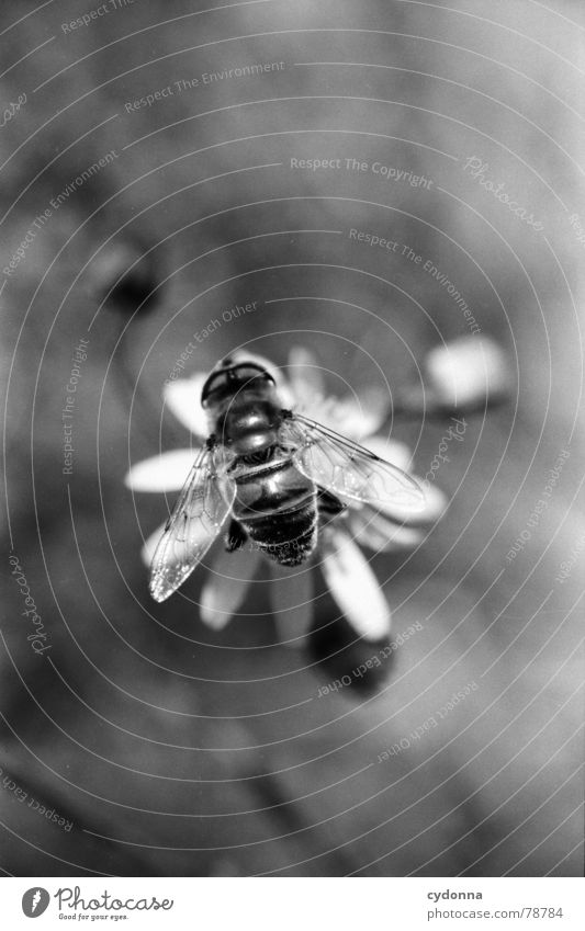 Meins! Natur Blume Pflanze Tier Arbeit & Erwerbstätigkeit Blüte klein fliegen süß Wachstum Flügel Insekt Biene Duft Botanik Fressen