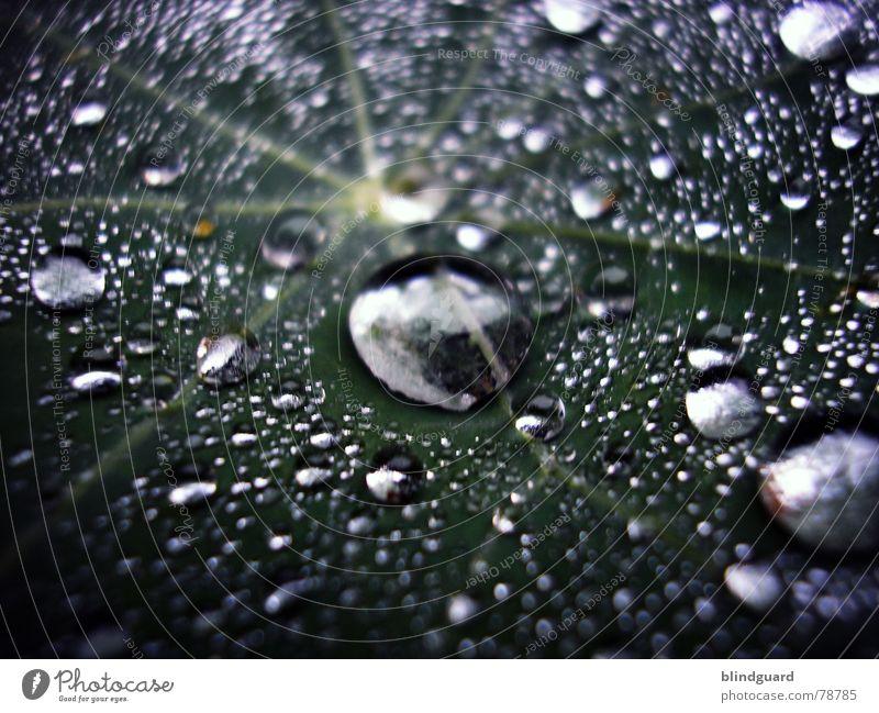 Liquid Silver liquide Blatt grün nass frisch Licht glänzend nah Regen blitzen Gewitterregen groß klein Makroaufnahme Wasser Tränen Wassertropfen