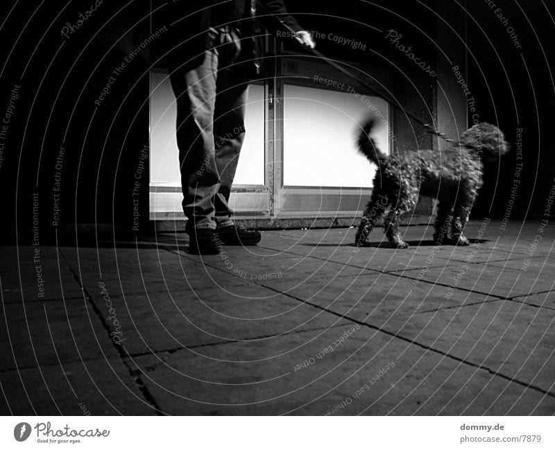 *Jagdhund* Hund Langzeitbelichtung Verkehr Schwarzweißfoto Locken ruhig kaz
