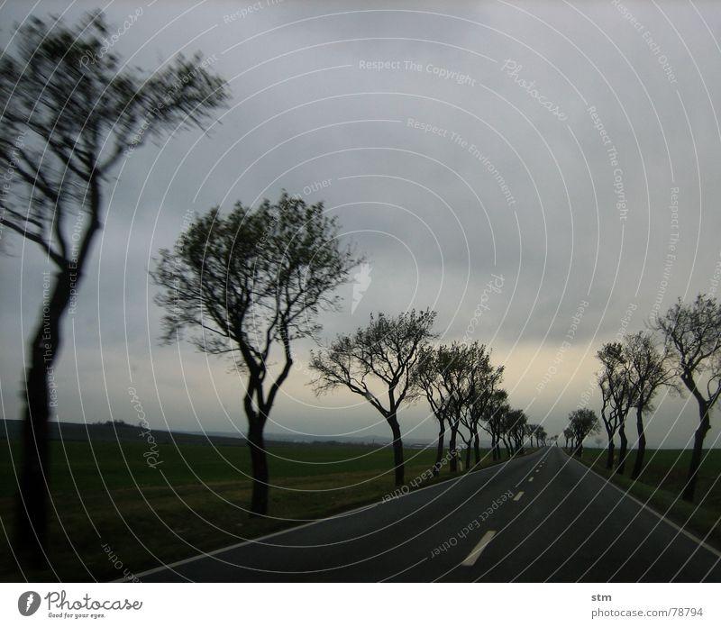 roadmovie 13 Natur Himmel Baum Ferien & Urlaub & Reisen Wolken Ferne Straße Leben dunkel Wiese Freiheit Wege & Pfade Denken Landschaft Feld Straßenverkehr