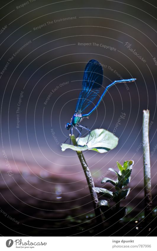 Heute im Rampenlicht Umwelt Natur Landschaft Tier Urelemente Wasser Sommer Schönes Wetter Pflanze Teich See Bach Fluss Wildtier Libelle Insekt Lebewesen