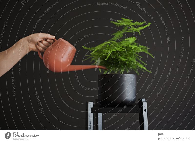 gießen Häusliches Leben Wohnung Innenarchitektur Dekoration & Verzierung feminin Arme Hand Pflanze Grünpflanze Topfpflanze Zimmerpflanze Gießkanne ästhetisch