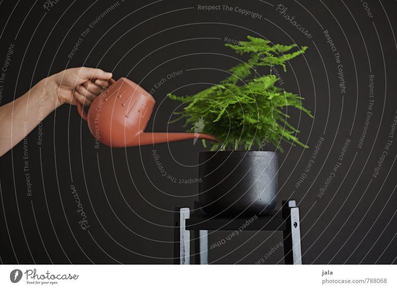 gießen Pflanze Hand Innenarchitektur feminin Wohnung Wachstum Häusliches Leben Dekoration & Verzierung Arme ästhetisch Grünpflanze gießen Zimmerpflanze Topfpflanze Gießkanne
