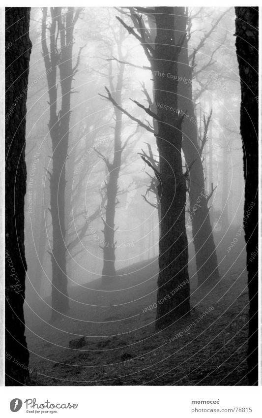verhangen die erste Wald Nebel Wolken Baum Trauer ruhig schön Einsamkeit Suche Sehnsucht leer Traurigkeit Ferne