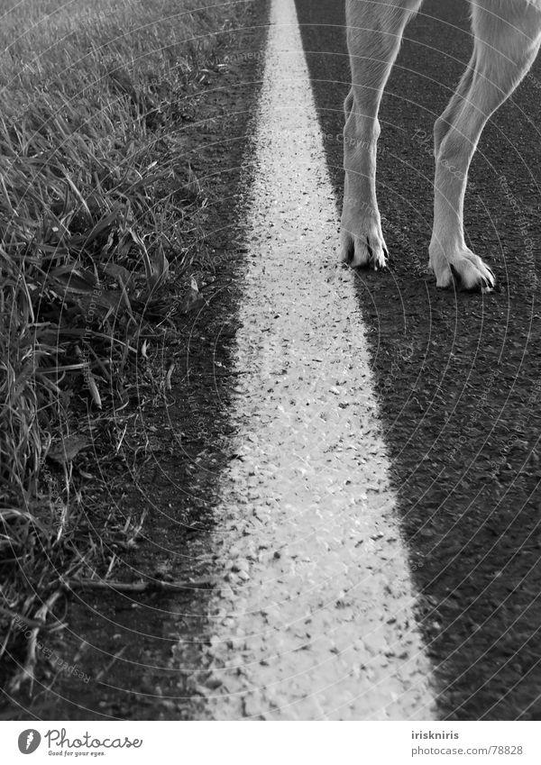 Blond Beauty losgehen Gras Straßenrand Linie Hund Pfote Säugetier auf die socken machen Beine Wege & Pfade Natur Detailaufnahme Körperteile Schwarzweißfoto Fuß