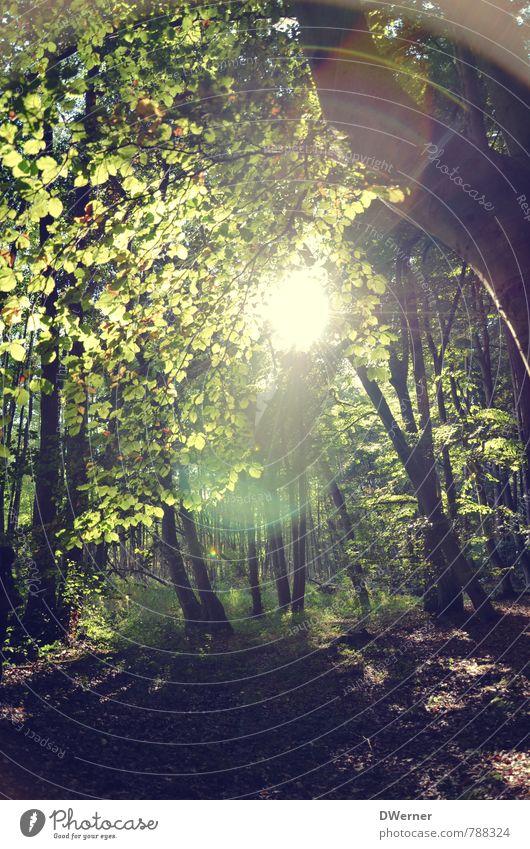 Wald harmonisch wandern Umwelt Natur Pflanze Sonne Sonnenaufgang Sonnenuntergang Sonnenlicht Frühling Schönes Wetter Baum Blühend leuchten gigantisch hell