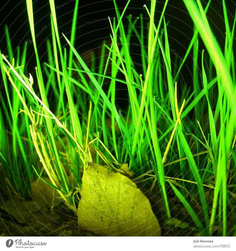 Neon maigrün durcheinander Gras Wiese Blatt gelb Neonlicht Licht dunkel Nacht Überbelichtung Strahlung grell verrückt Grasland Grünfläche Grasnarbe toben Rasen