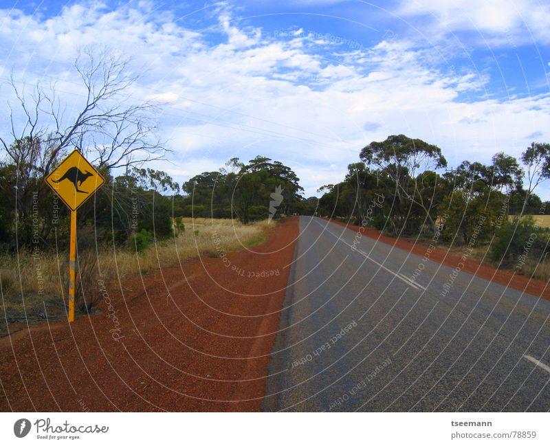 Outback Ferne Australien Känguruh rot Licht Wolken Baum Unendlichkeit Straßennamenschild Himmel Asphalt Einsamkeit leer roadtrip Autobahn Warnhinweis Wildtier