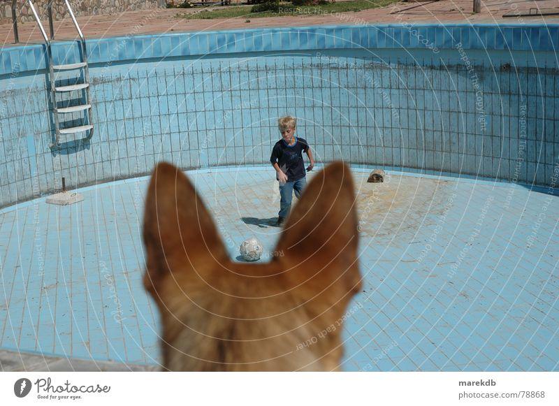 Wachhund Hund Kind Wasser Spielen leer Schwimmbad Ohr Ball Fell Ballsport Bolivien Südamerika
